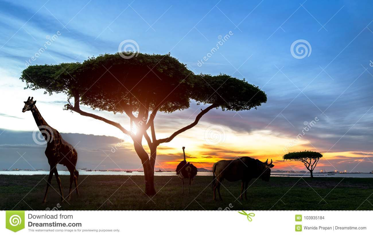 South africa of Silhouette African night safari scene with wildlife animals