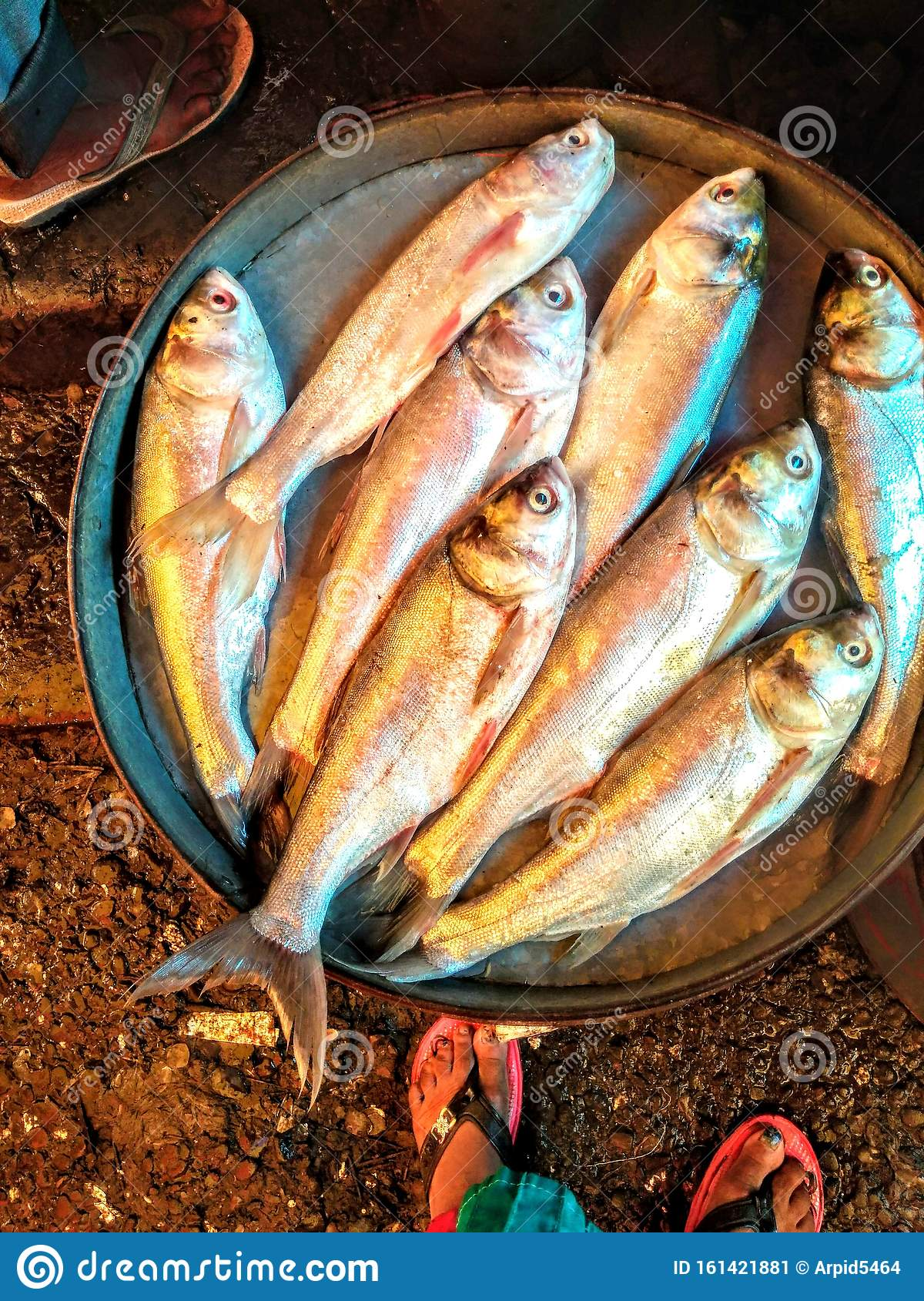 South Asia Popular Fish Name Silver Fish Non Veg Food Stock Image Image Of Food Found 161421881