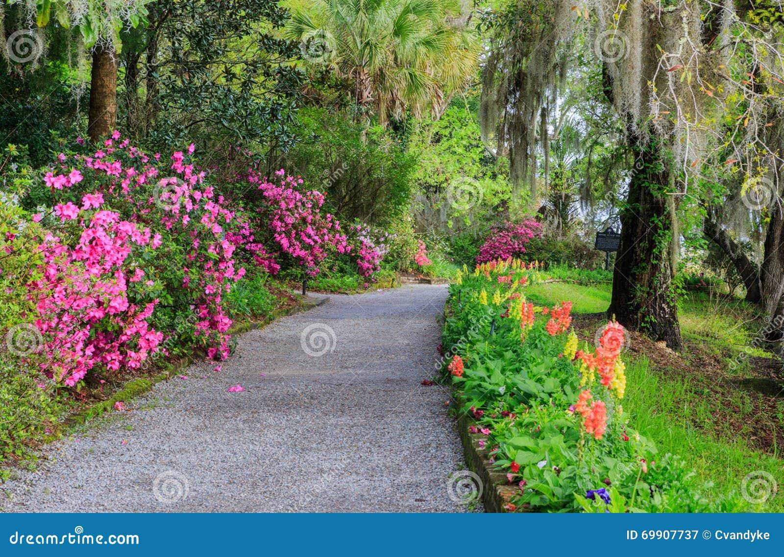 South Carolina Garden Walkway Flowers Azaleas Stock Photo - Image ...