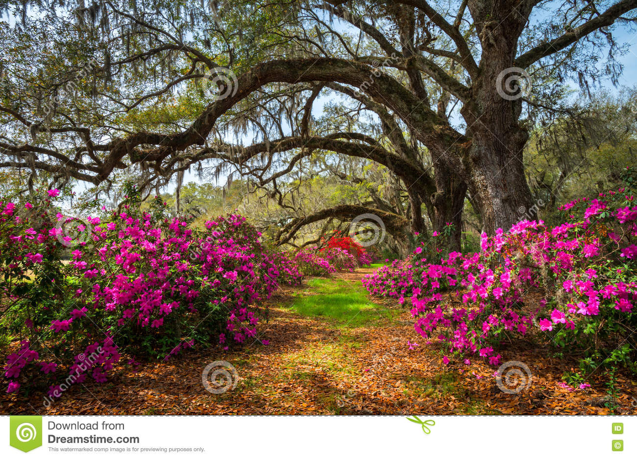 South Carolina Spring Flowers Charleston SC Lowcountry Scenic