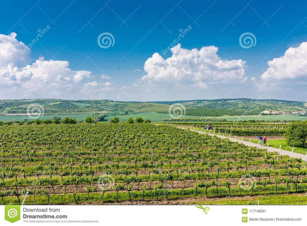 South Moravia, Czech republic: Vineyard fields on agriculture land. Countryside meadow, vineyard plant and beautiful landscape nea