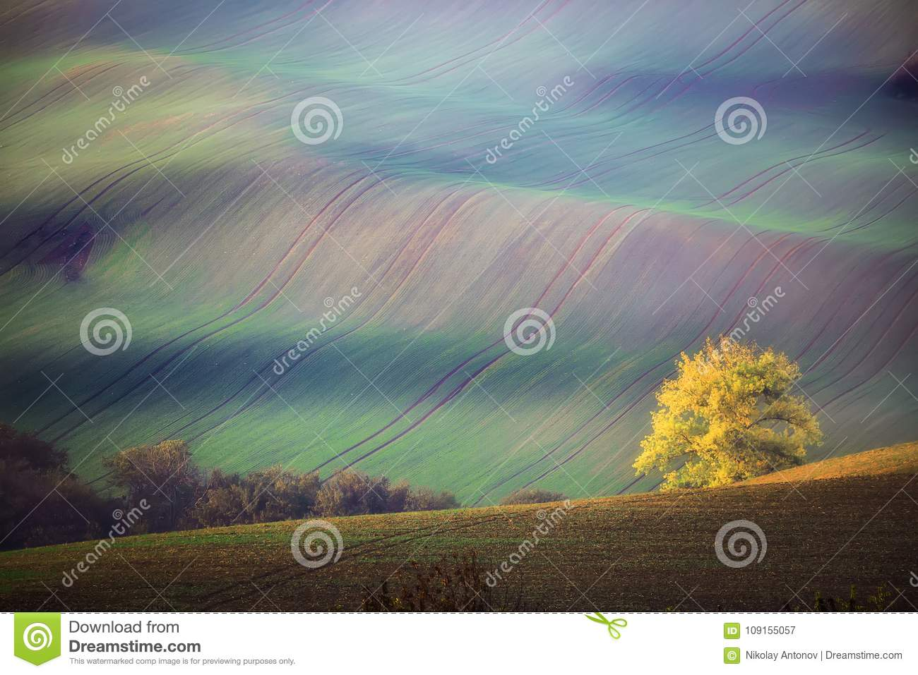 South Moravian landscape with trees and wavy green fields in autumn. Wavy fields in Czech Republic. Czech Tuscany. Nature backgrou