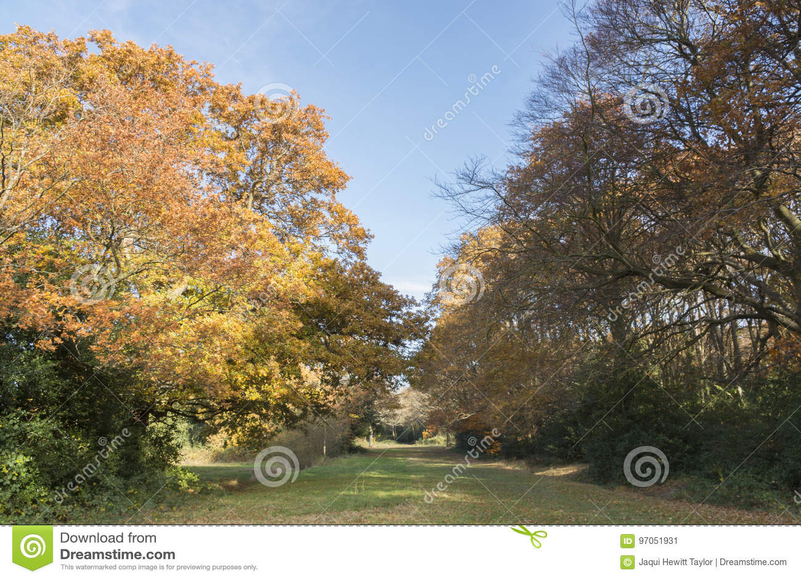 Southampton Common in Autumn