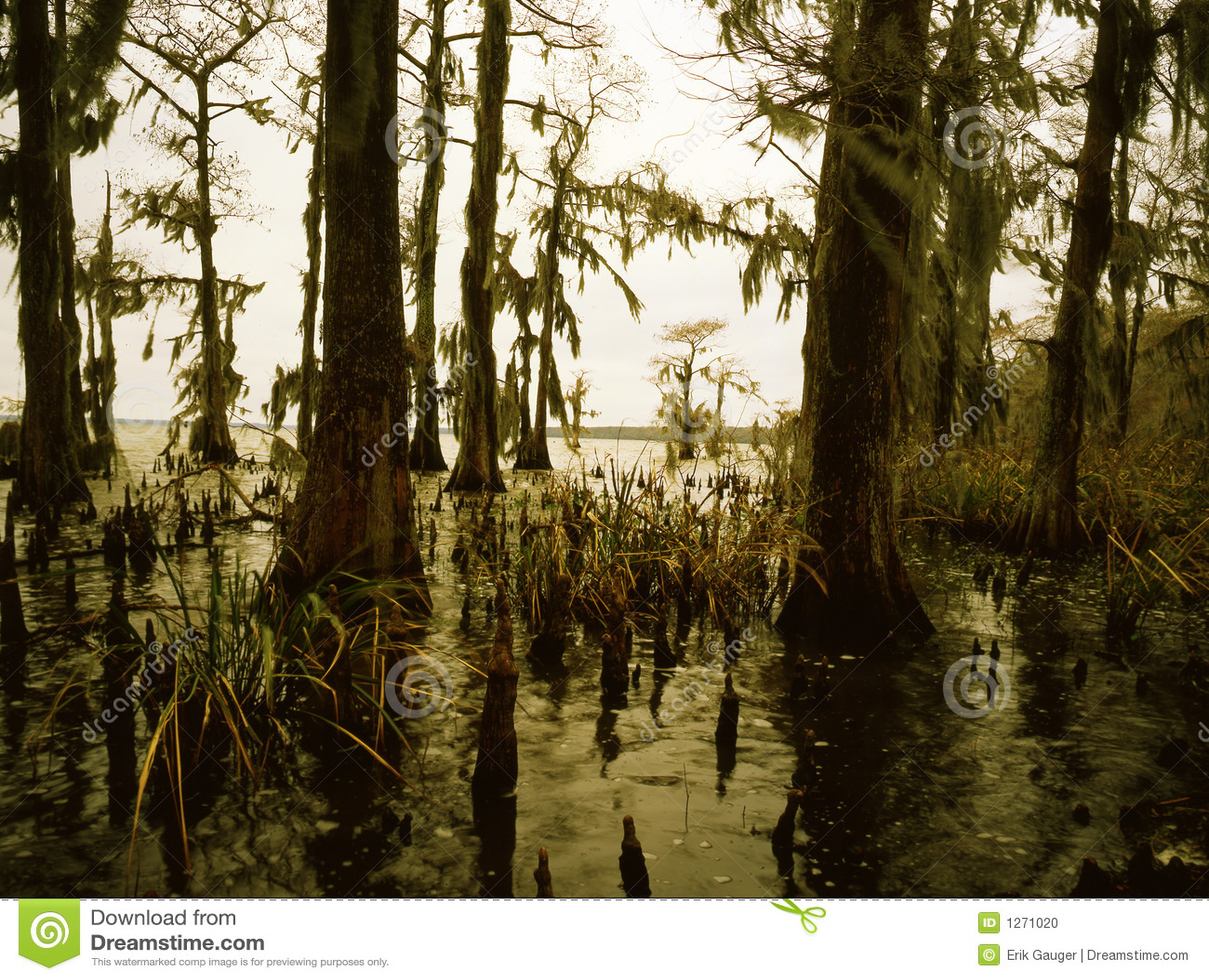 Download Southern Bayou stock photo. Image of firth, bayous, louisiana - 1271020