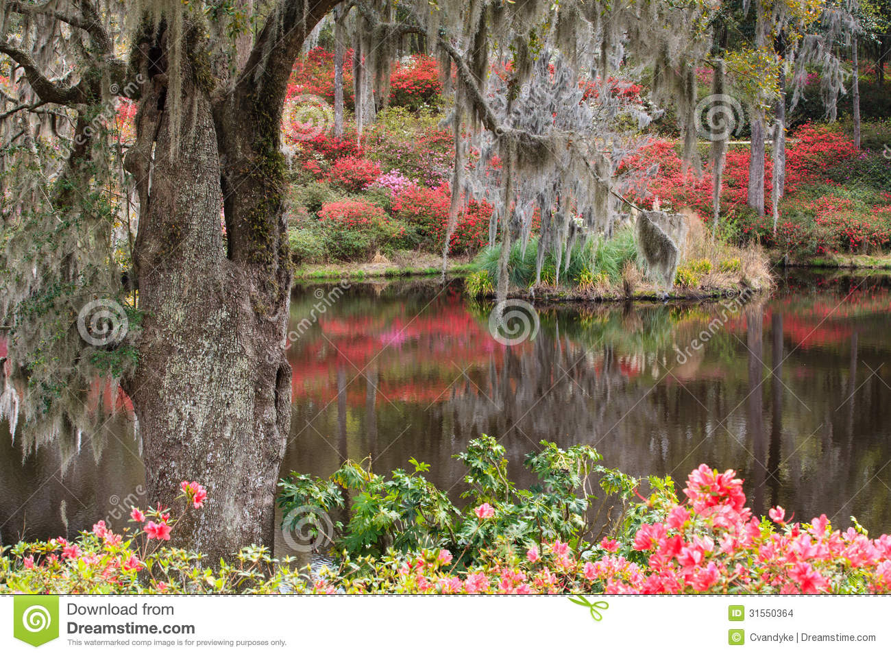 Charleston SC Southern Garden Landscape Stock Photo - Image of moss ...