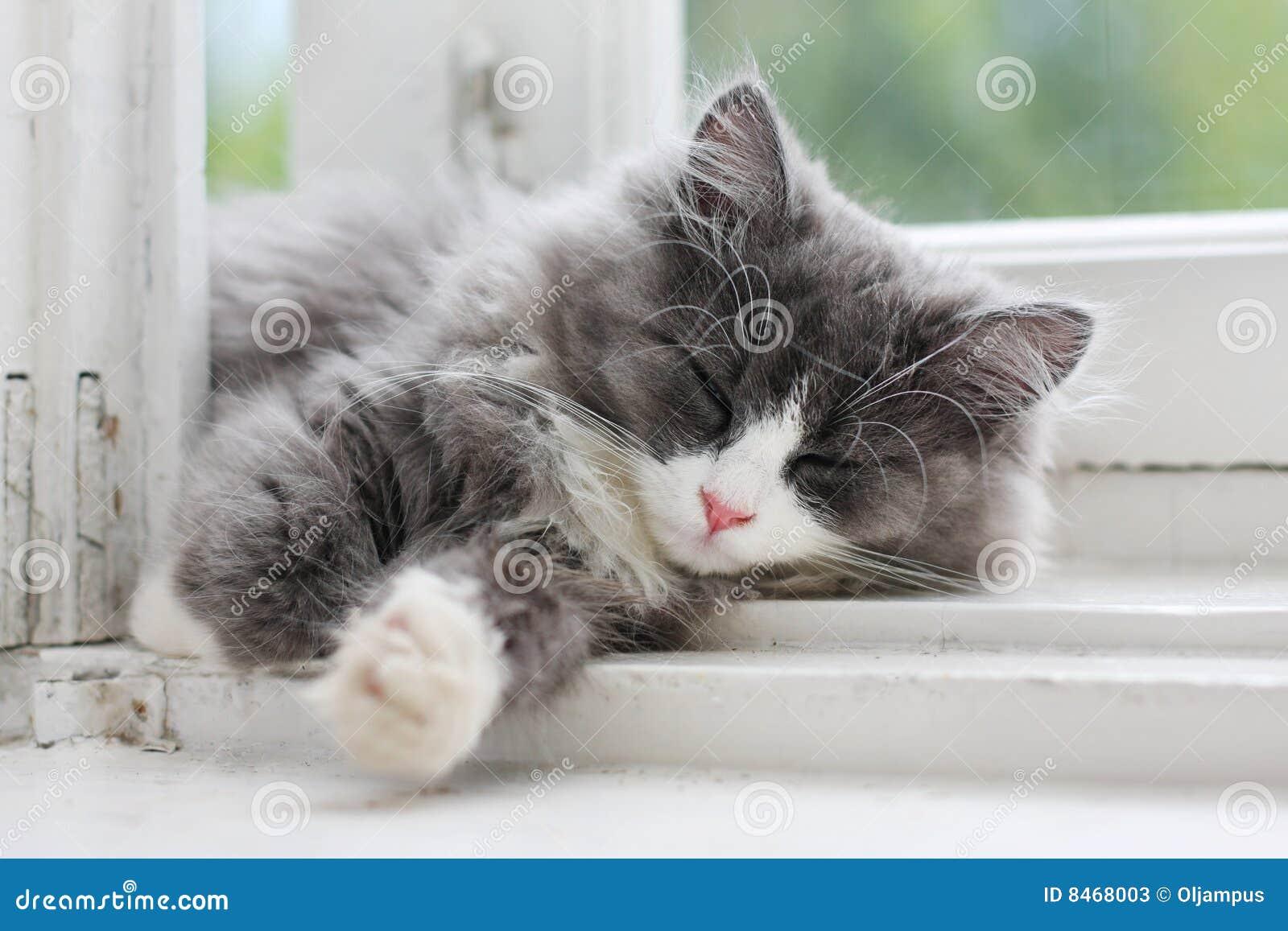 Sova fönster för kattungeavsats