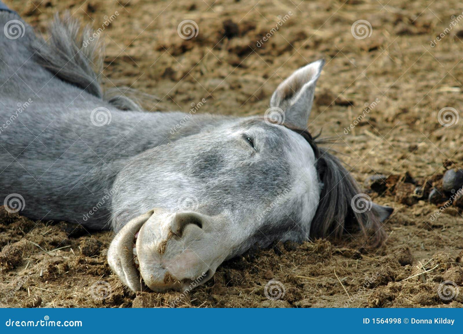 Sova för häst