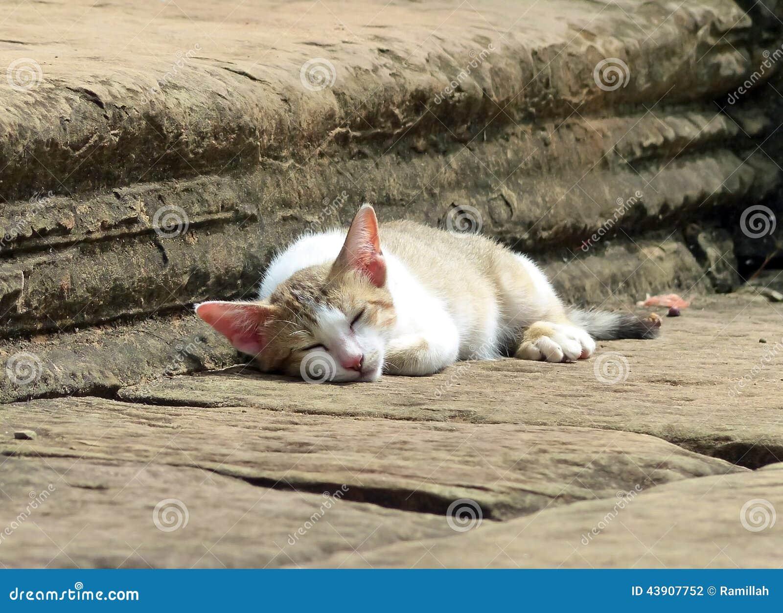 Sova katten på Banteay Samre