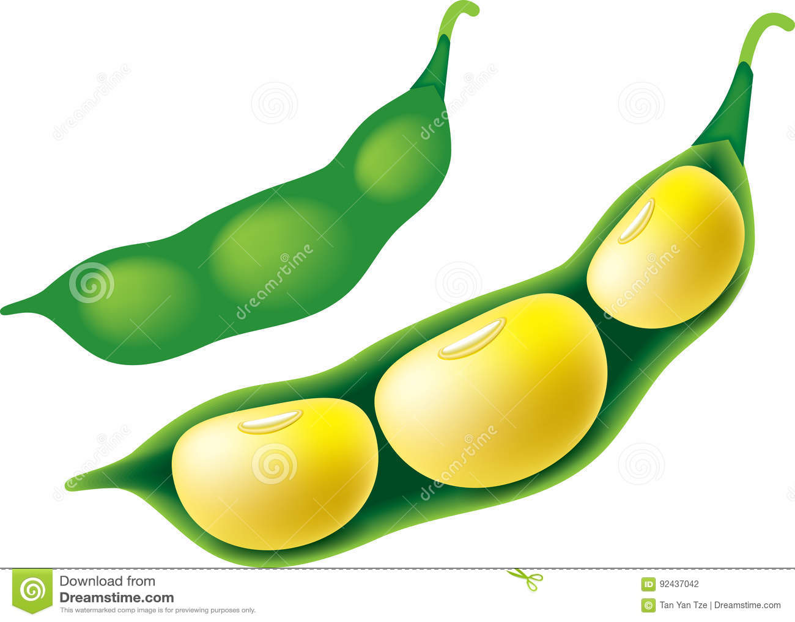 soya bean stock illustration illustration of clipart 92437042 rh dreamstime com soybean clipart black and white Corn Clip Art