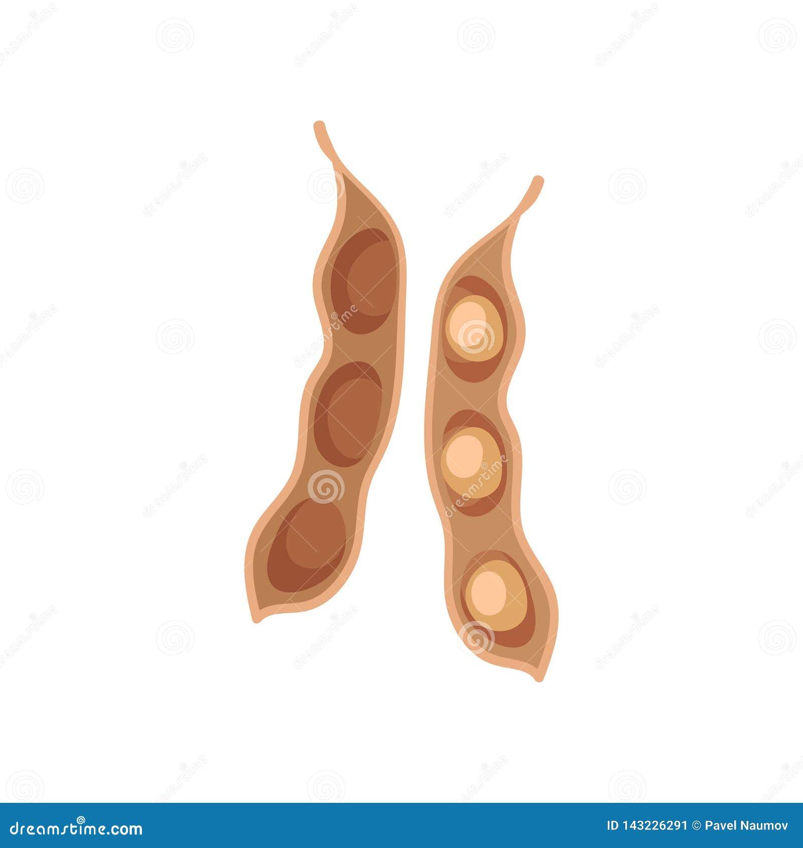 Soybean Pod On White Background. Vector Flat Illustration ...