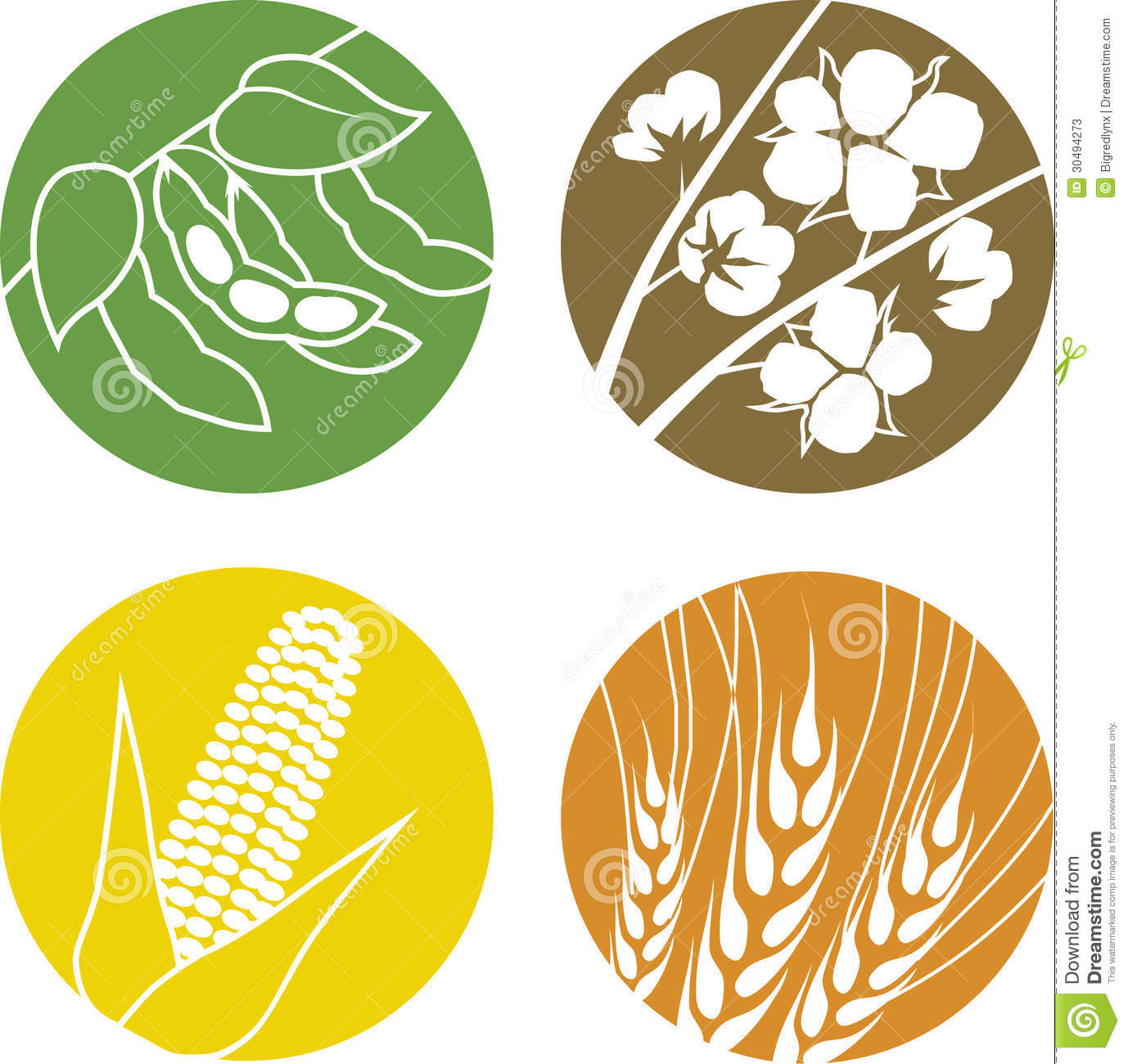Soybeans, Cotton, Corn And Wheat Stock Photos - Image: 30494273