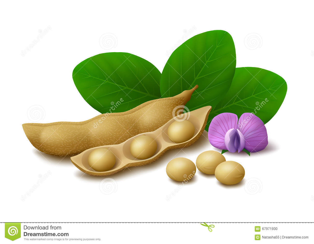 Soybeans Cartoons, Illustrations & Vector Stock Images ...