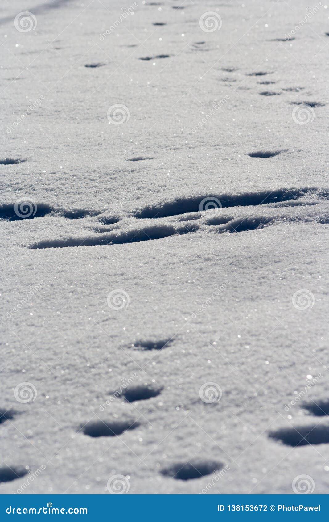 Spår av djur i snö