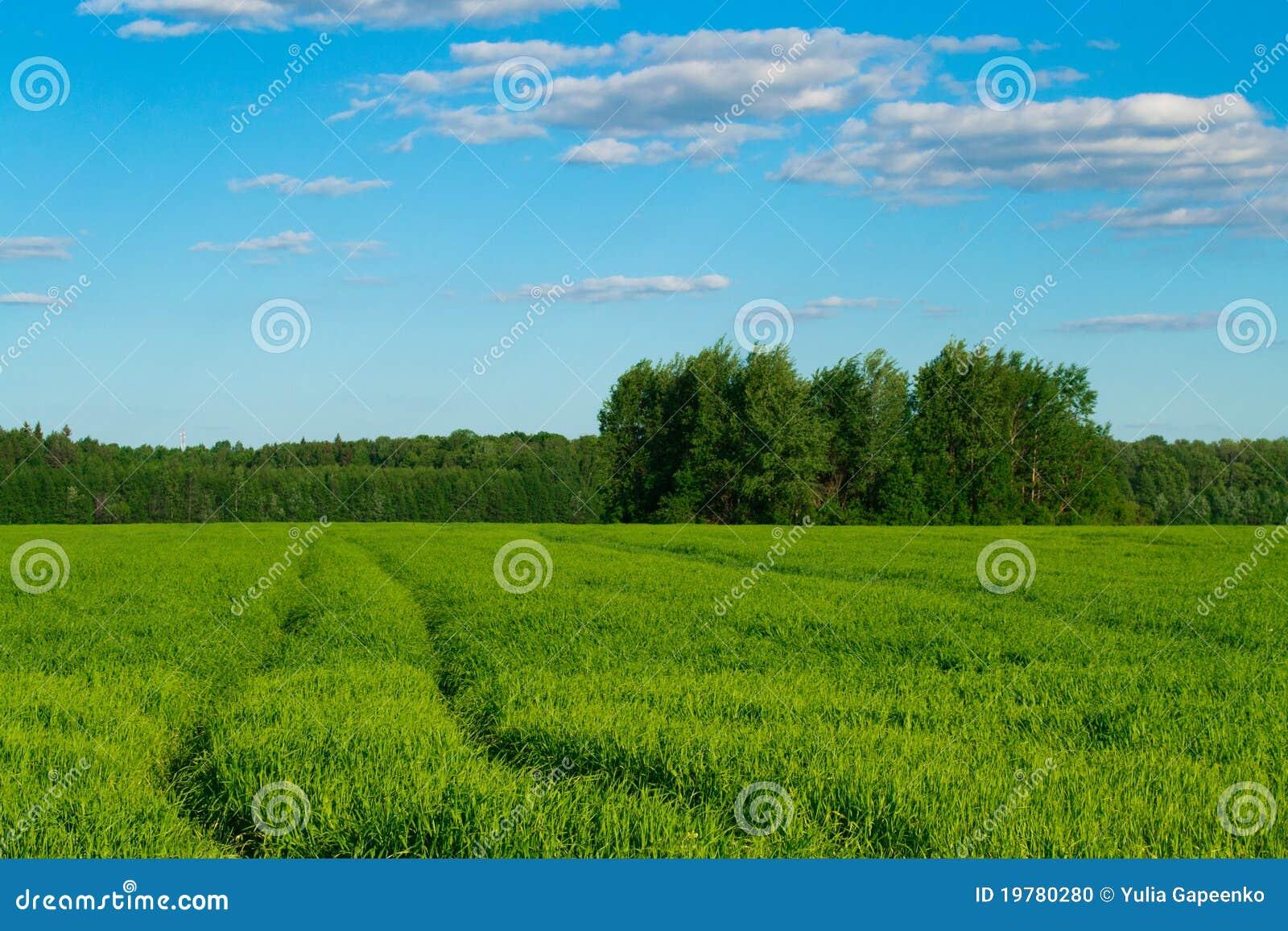 Spår i fältet mot den blåa skyen