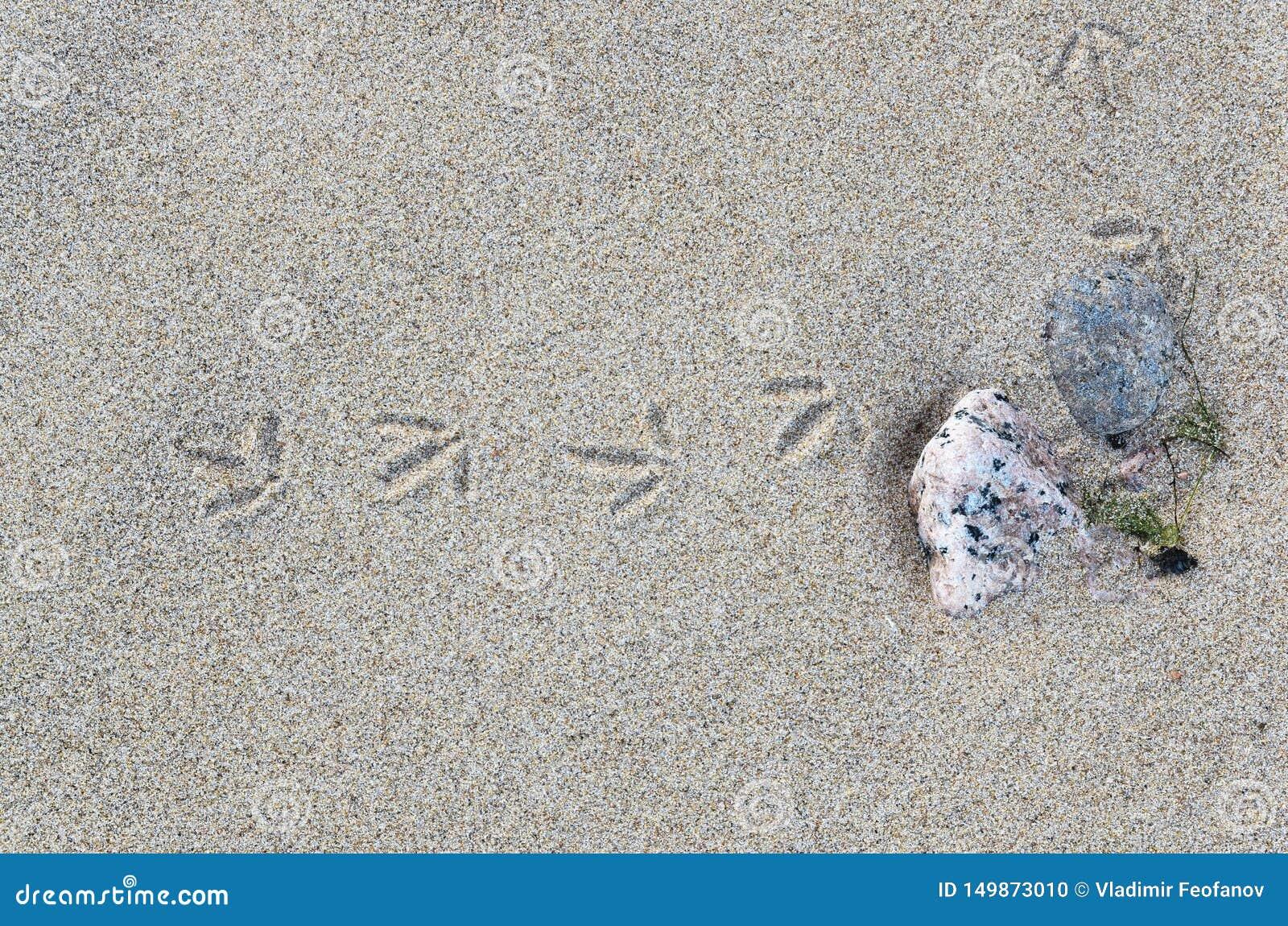 Spårar av en liten fågel i sanden