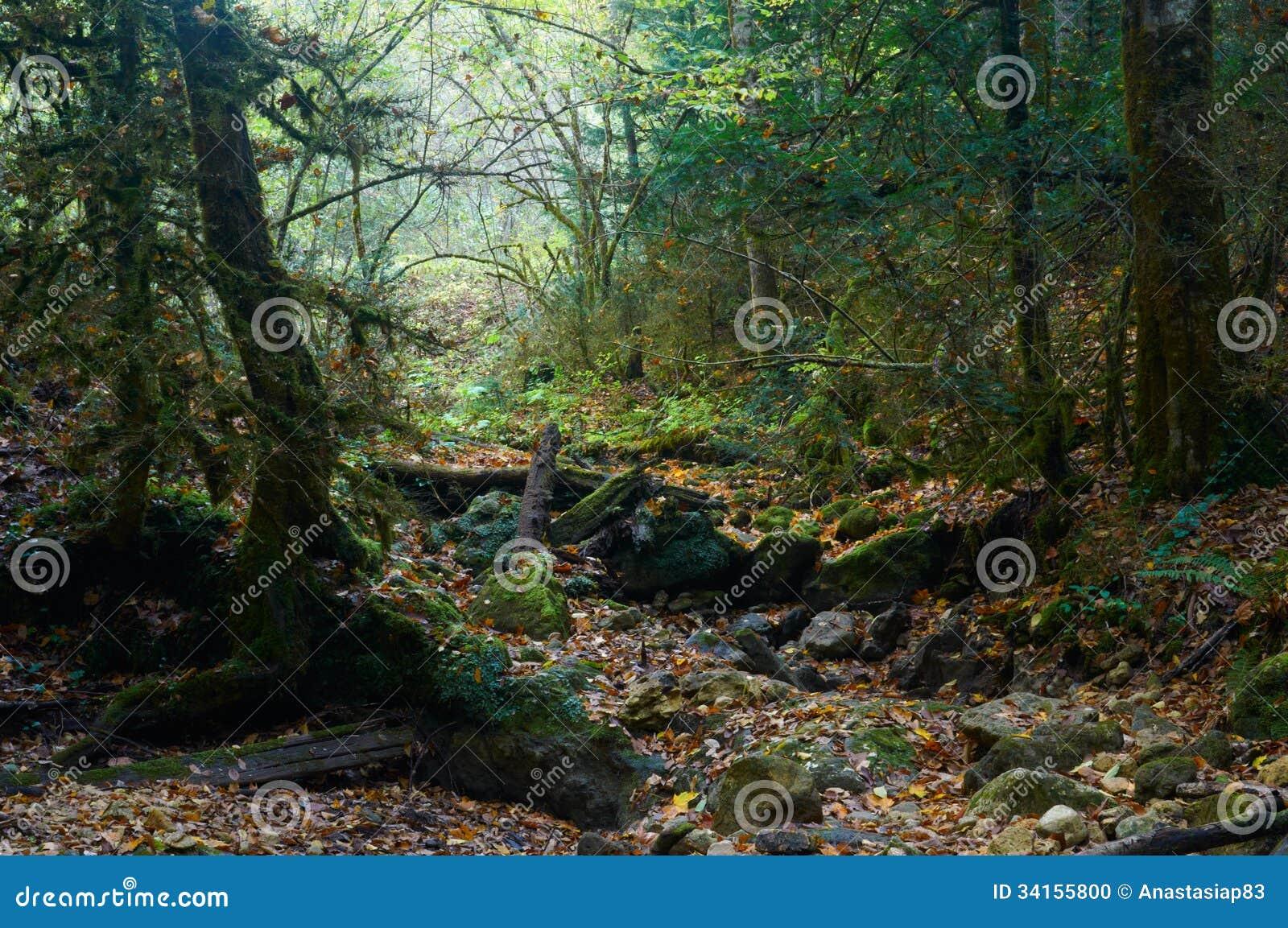 Spöklik halloween skog med ett stupat träd