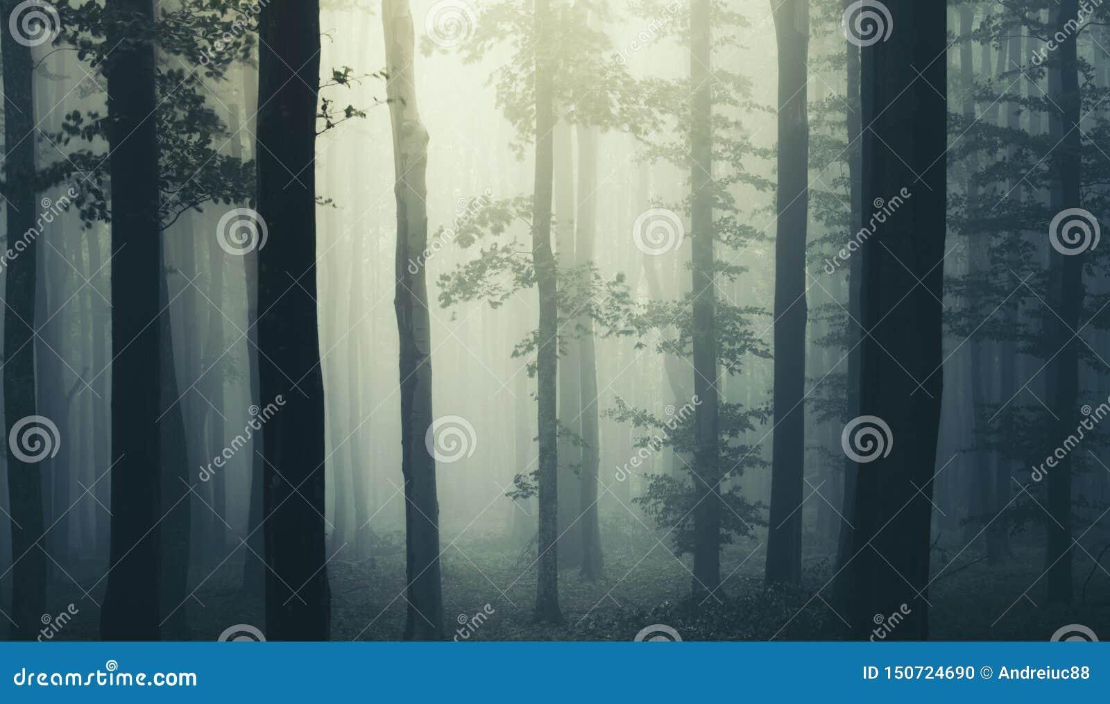 Spöklik läskig skog med dimma till och med träd