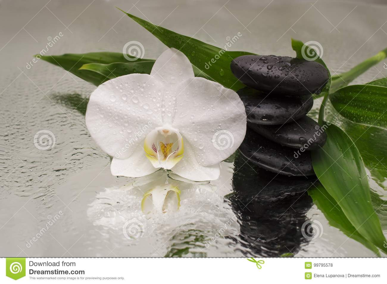 Spa Background - orchids black stones and bamboo on water