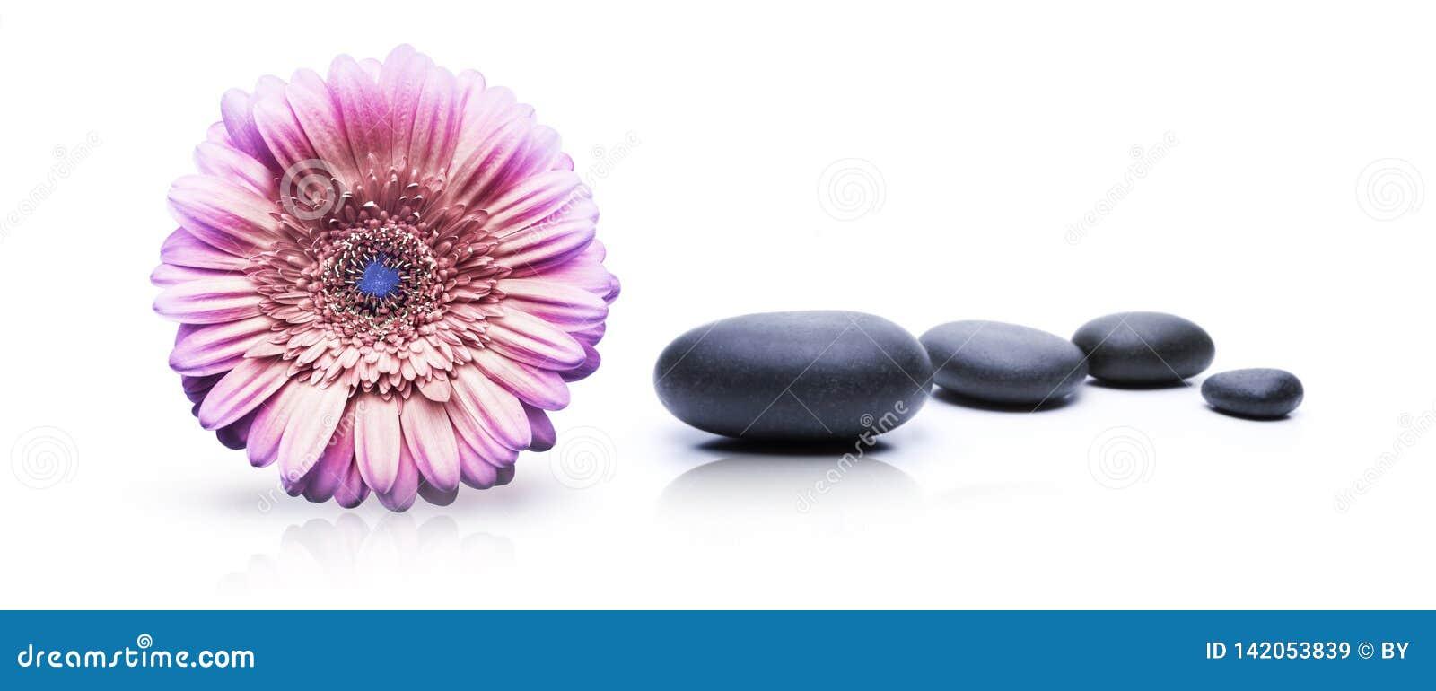 Spa blomma och stenar