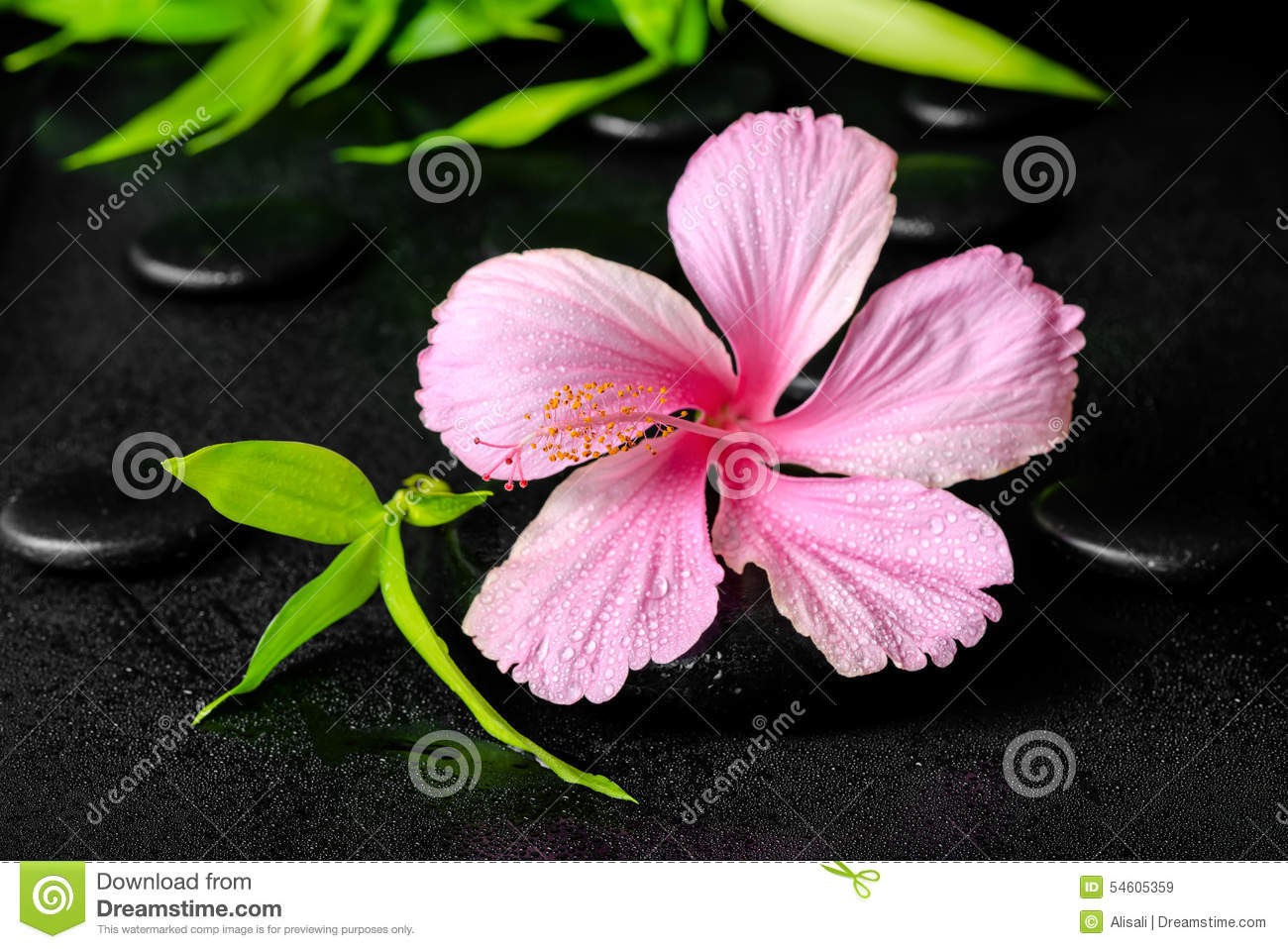 Spa concept of pink hibiscus flower and twig bamboo on zen basal download spa concept of pink hibiscus flower and twig bamboo on zen basal stock image izmirmasajfo