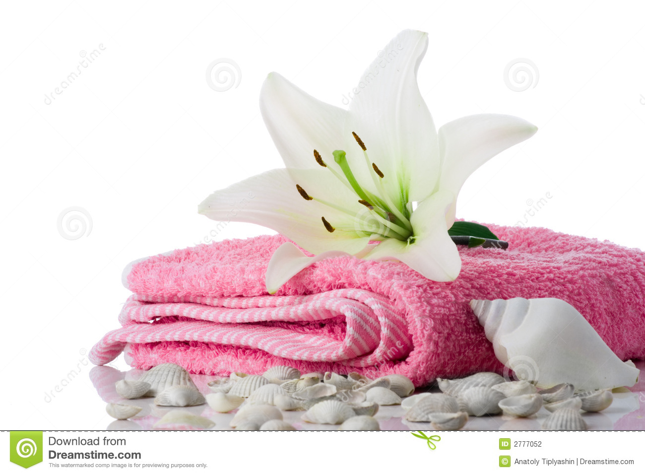 spa flower towel sea shell stock photo image of nature