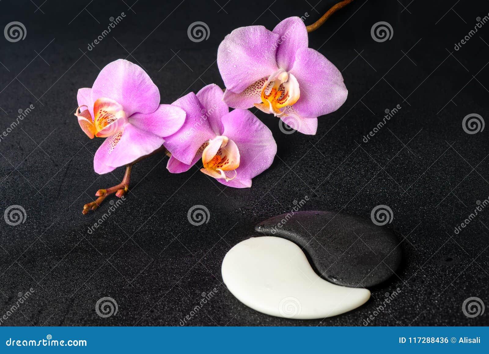 Spa inställning av Yin-Yang stenar och den lila orkidén