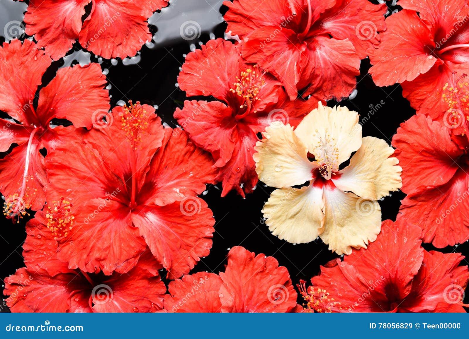 Spa wellness aromatherapy conceptbeautiful flowers in the stock spa wellness aromatherapy conceptbeautiful flowers in the water spa izmirmasajfo
