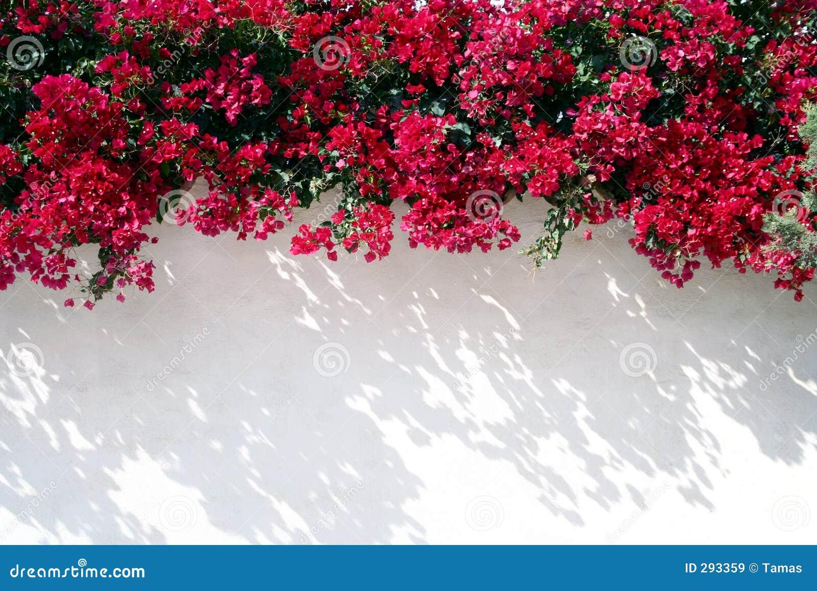 Spaanse muur met bloemen
