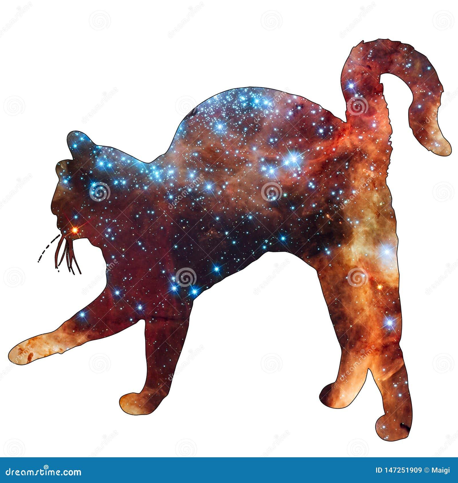 Space Animal Cat