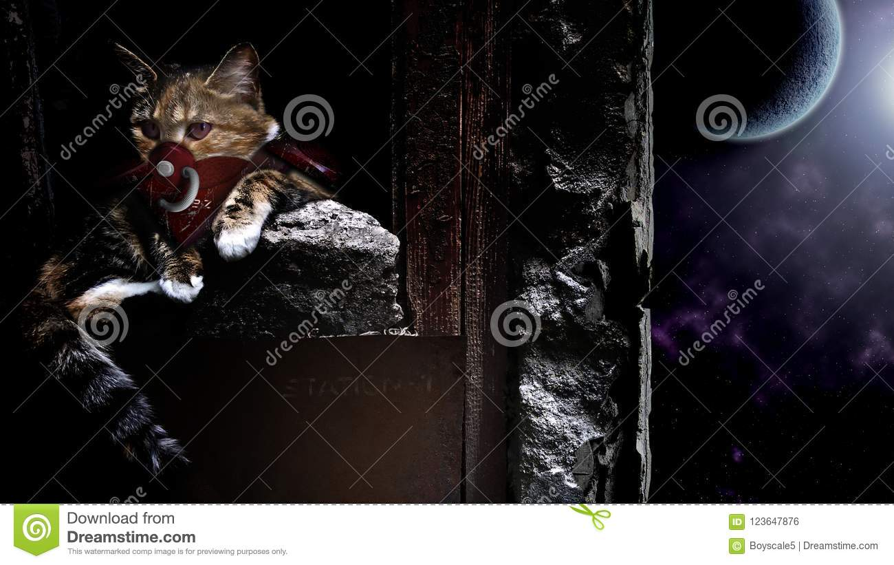 Download Space Cat Wallpaper Stock Illustration Of Fascinating