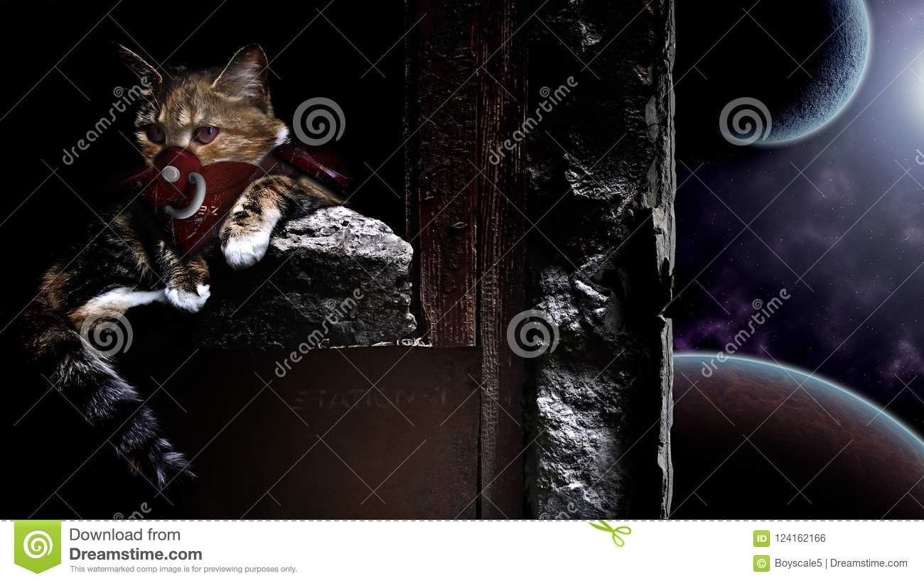 Space Cat Wallpaper Stock Photo Image Of Rusty Wall 124162166