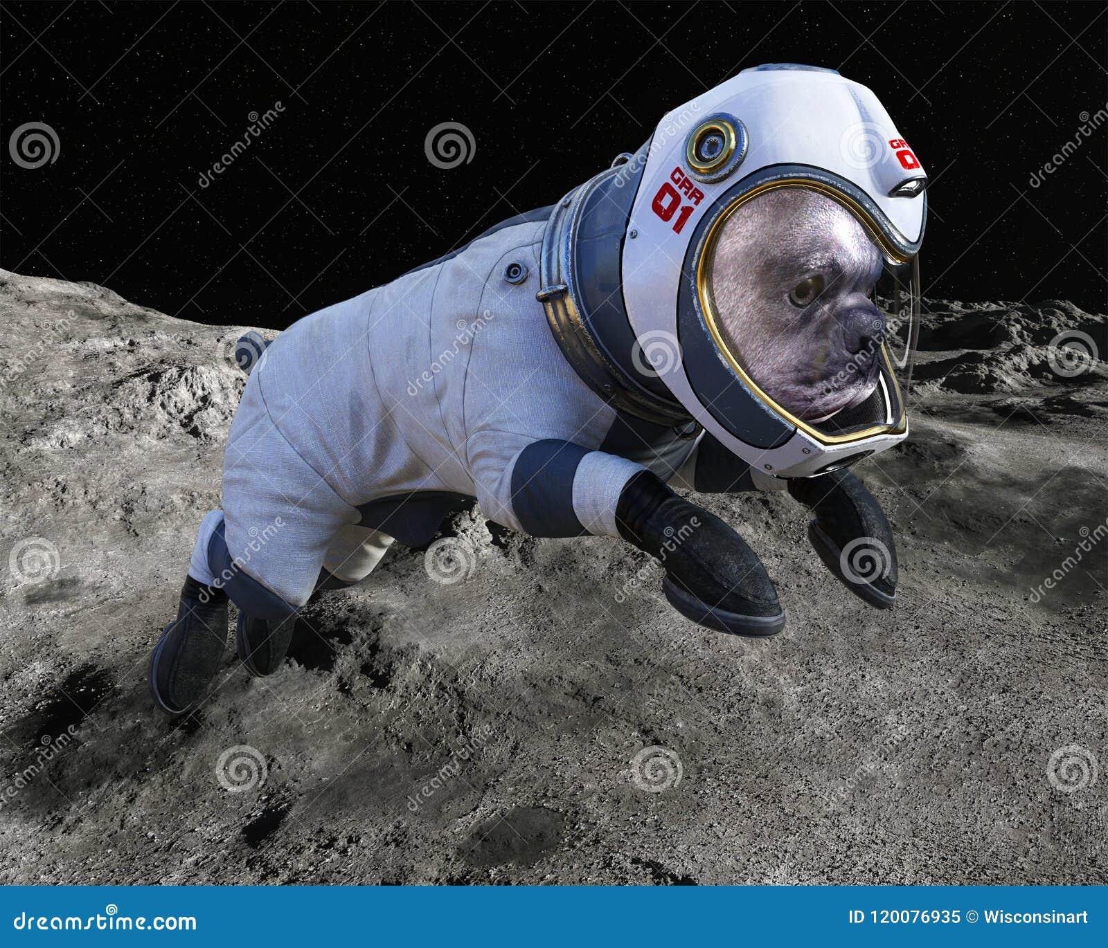 Space Dog, Moon Walk, Astronaut, Lunar Surface Stock Image - Image