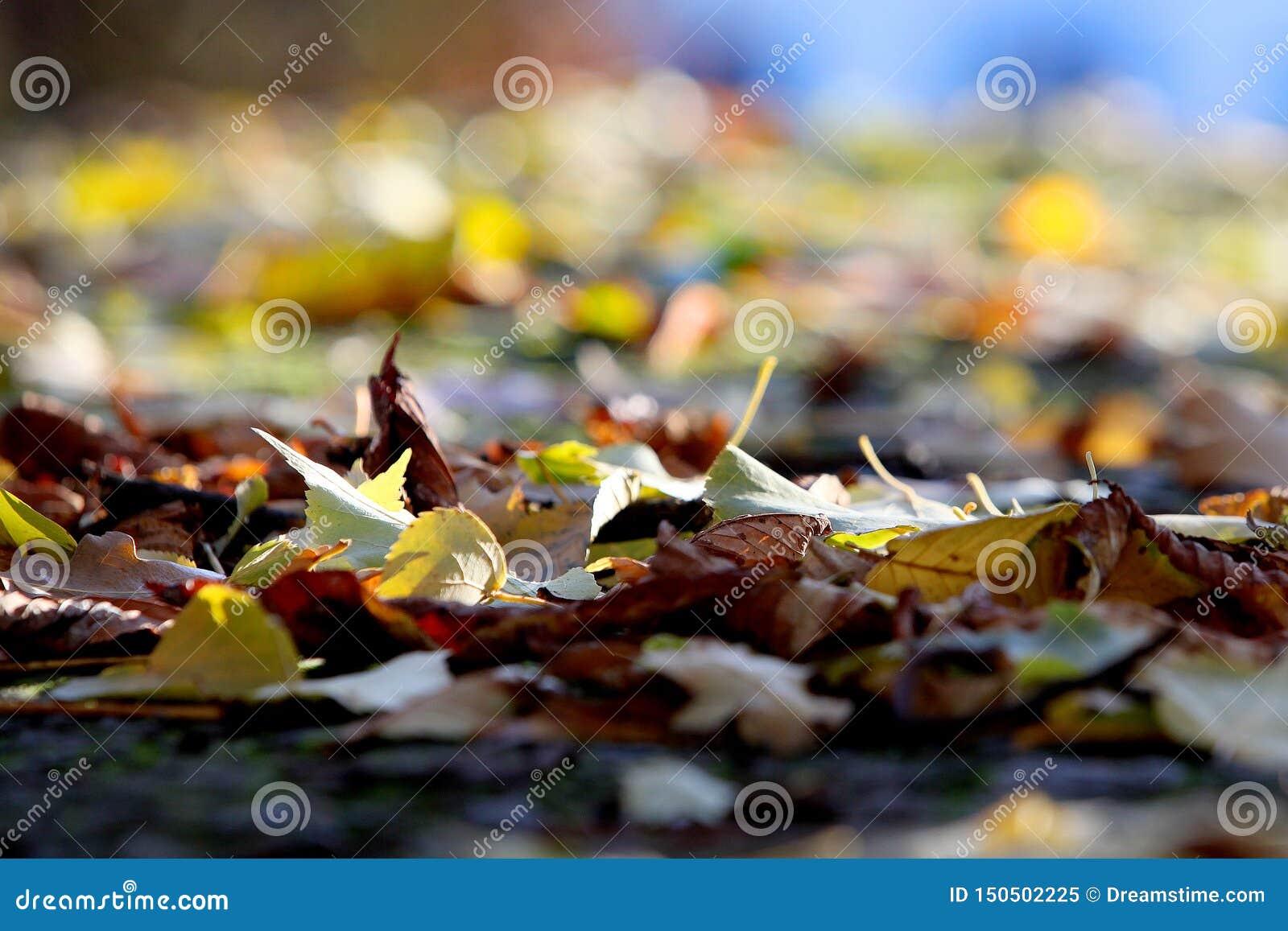 Spadać liście na zamazanym tle i nikt wokoło