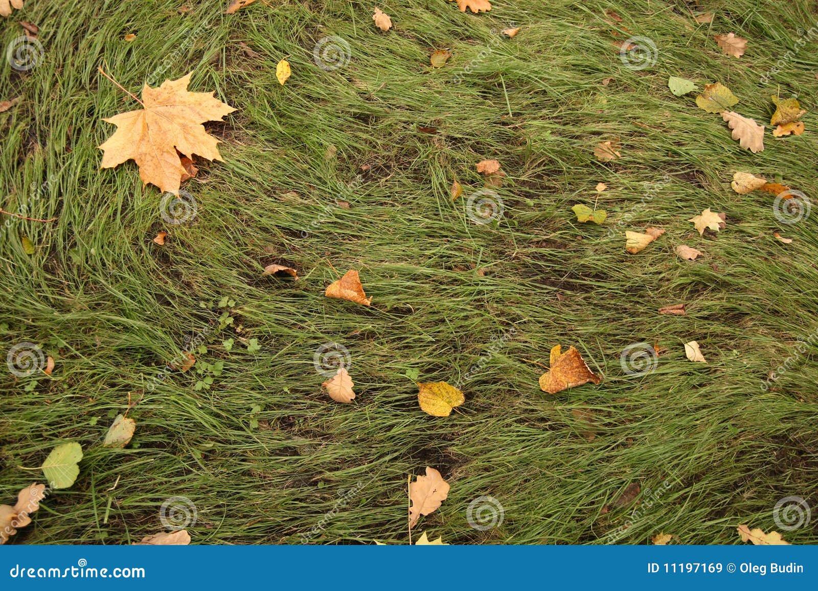 Spadać trawa opuszczać kolor żółty