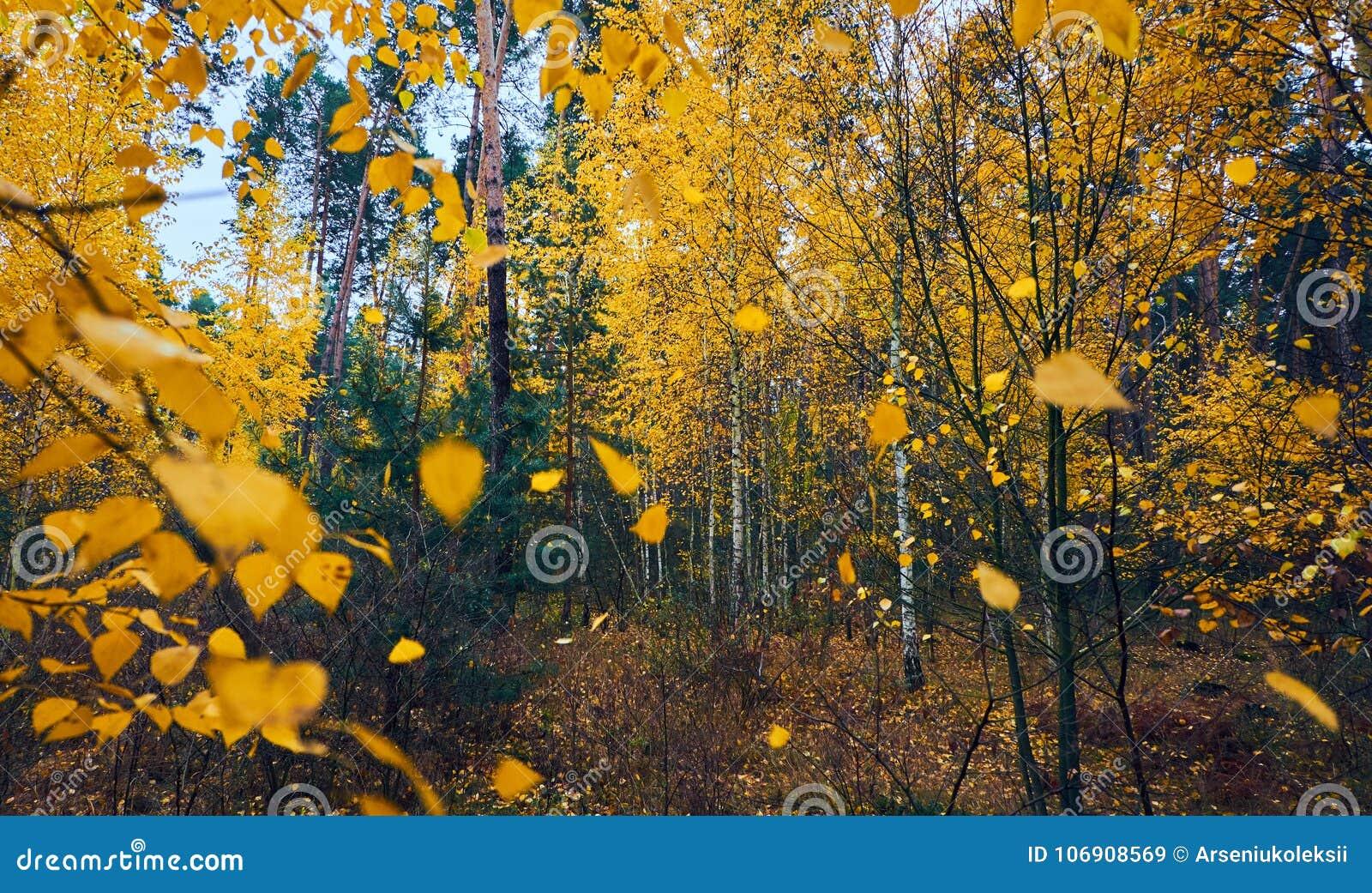 Spada kolorów żółtych liście