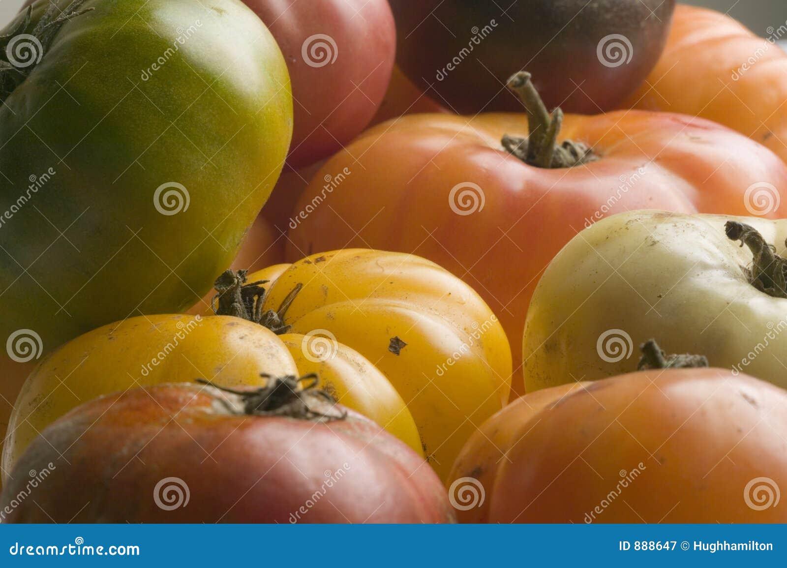Spadek pomidorów