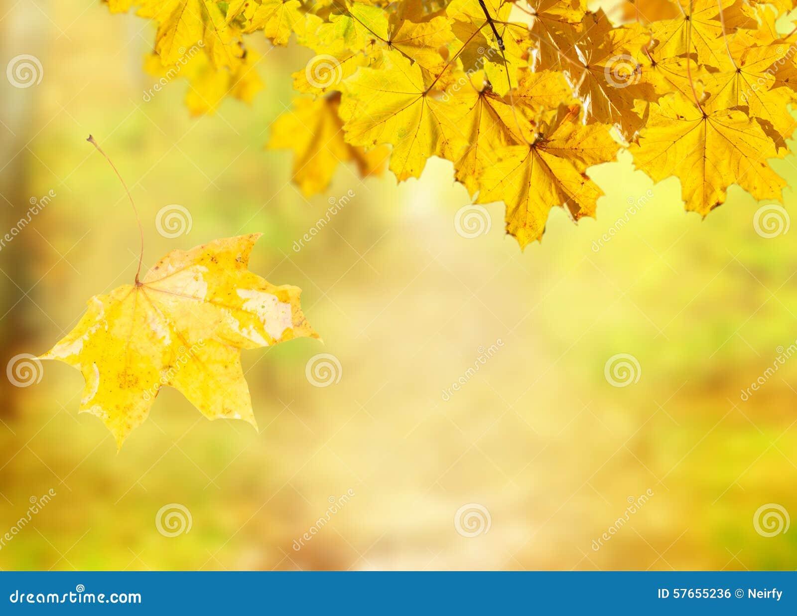 Spadków liście z zieloną trawą