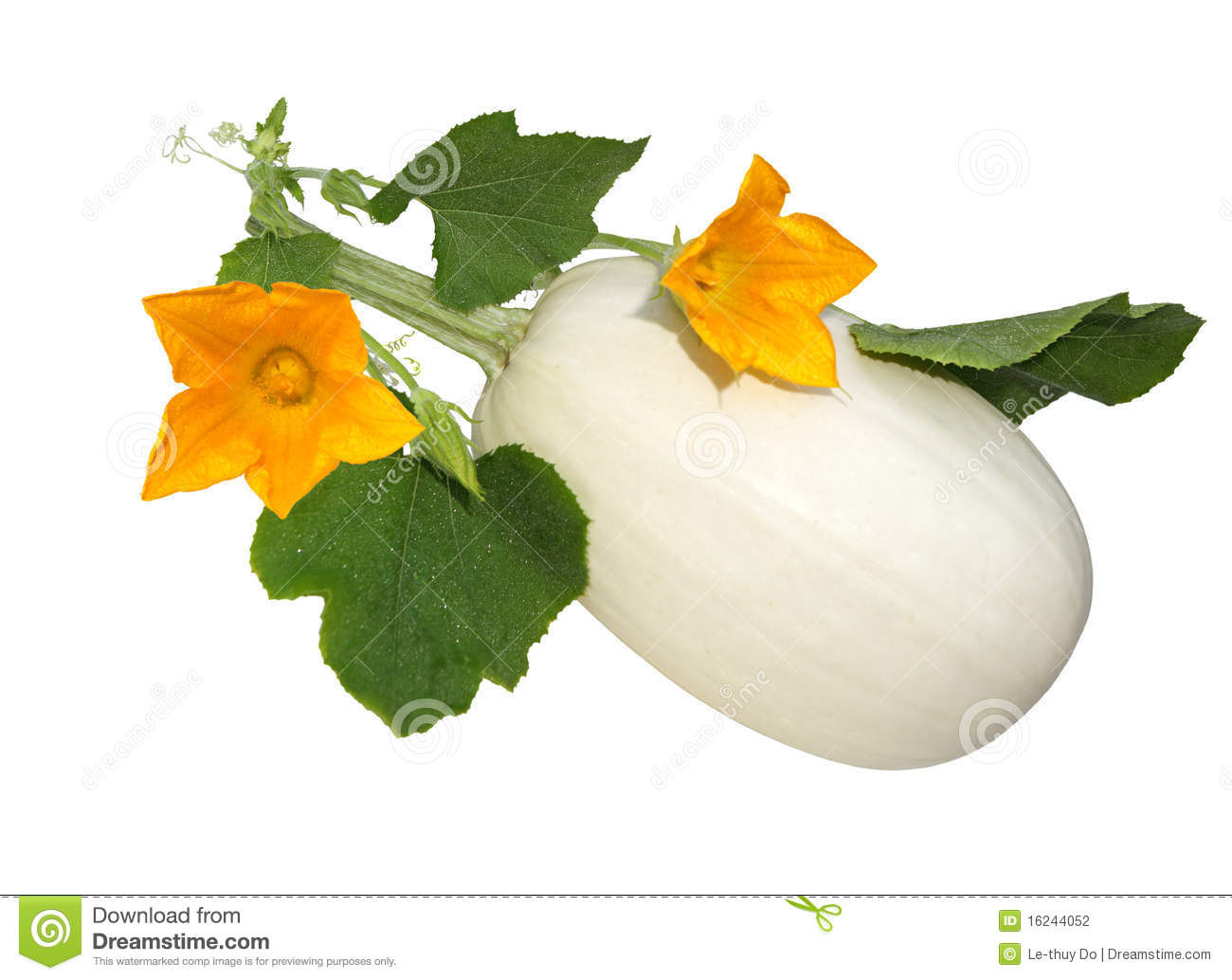 how to prepare white squash