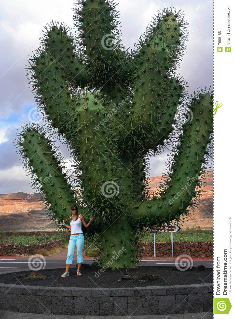 Spain lanzarote jardin de cactus stock image image of tourist travel 7669185 - Jardin de cactus ...