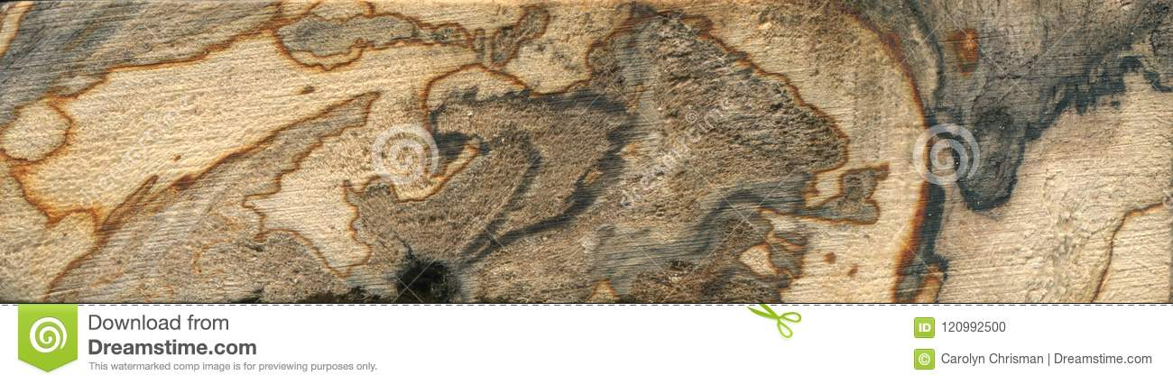 Spalted Wood Swirl Stock Photo Image Of Moldy Patterns 120992500