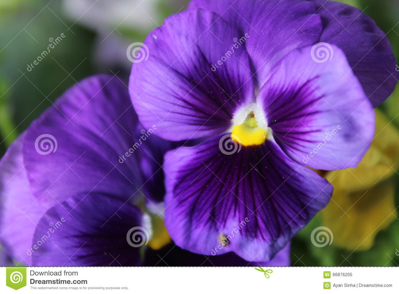 Spangy Flower stock image  Image of canon, violet, file - 66876205