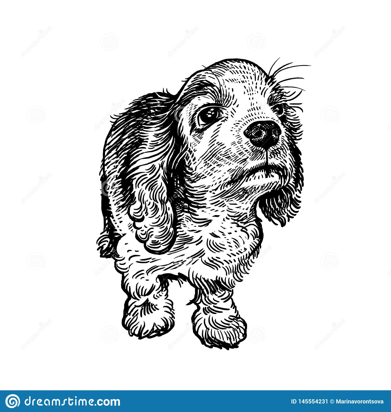 Spaniel Dog Cute Puppy Black And White Hand Drawing Stock Vector Illustration Of Baby Asleep 145554231