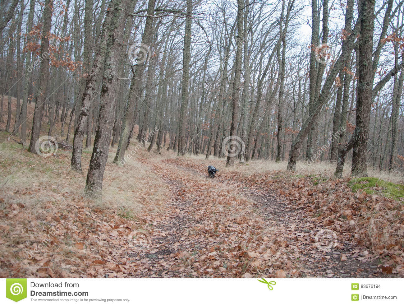 Spaniel hunting dog running in autumn forest