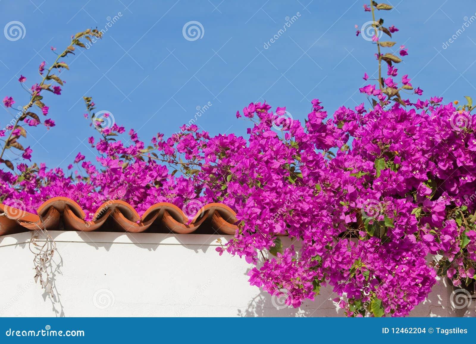 Download Spanischer Garten stockfoto. Bild von blume, blau, garten - 12462204
