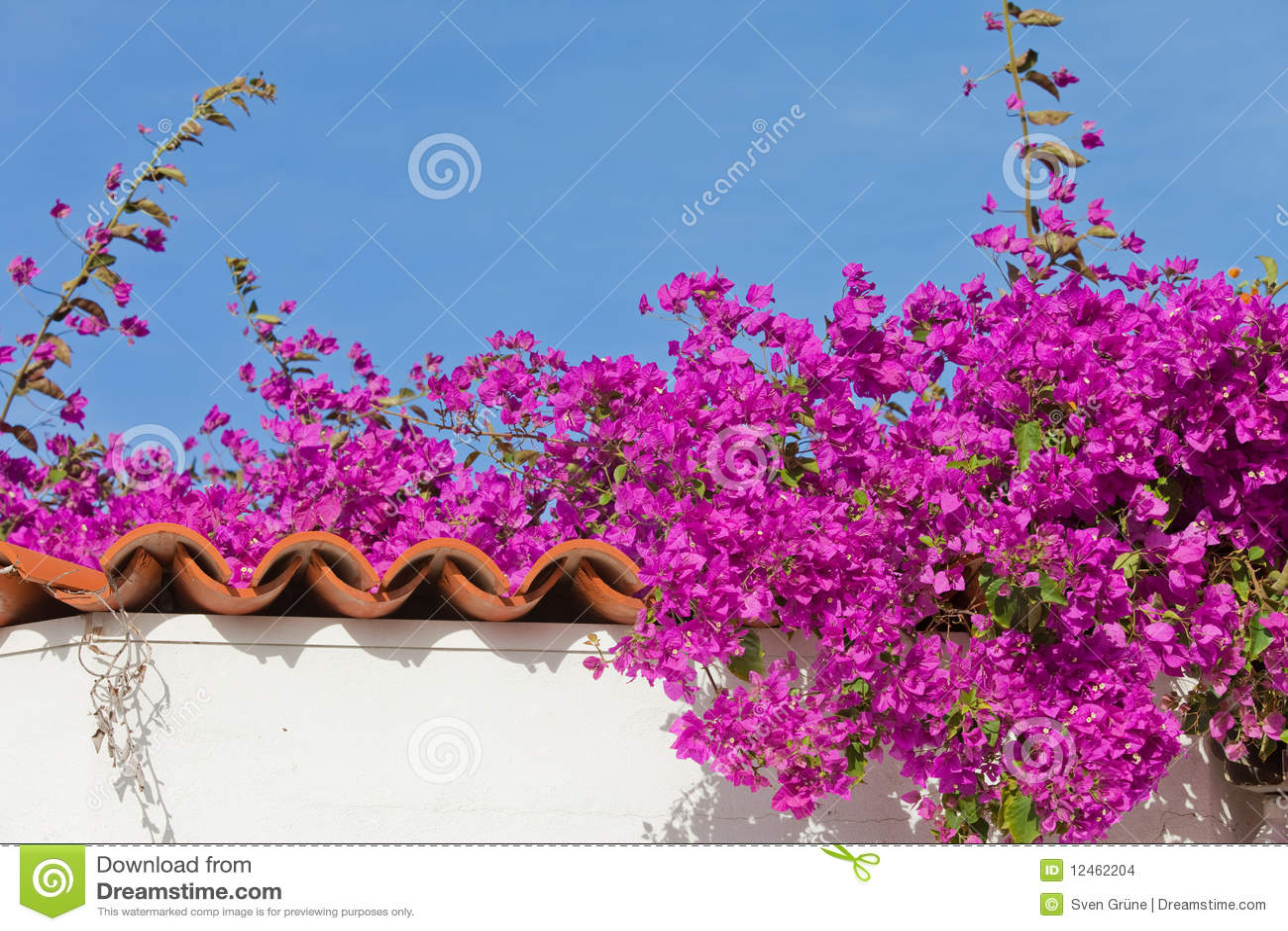 Spanish Garden Stock Images Image 12462204