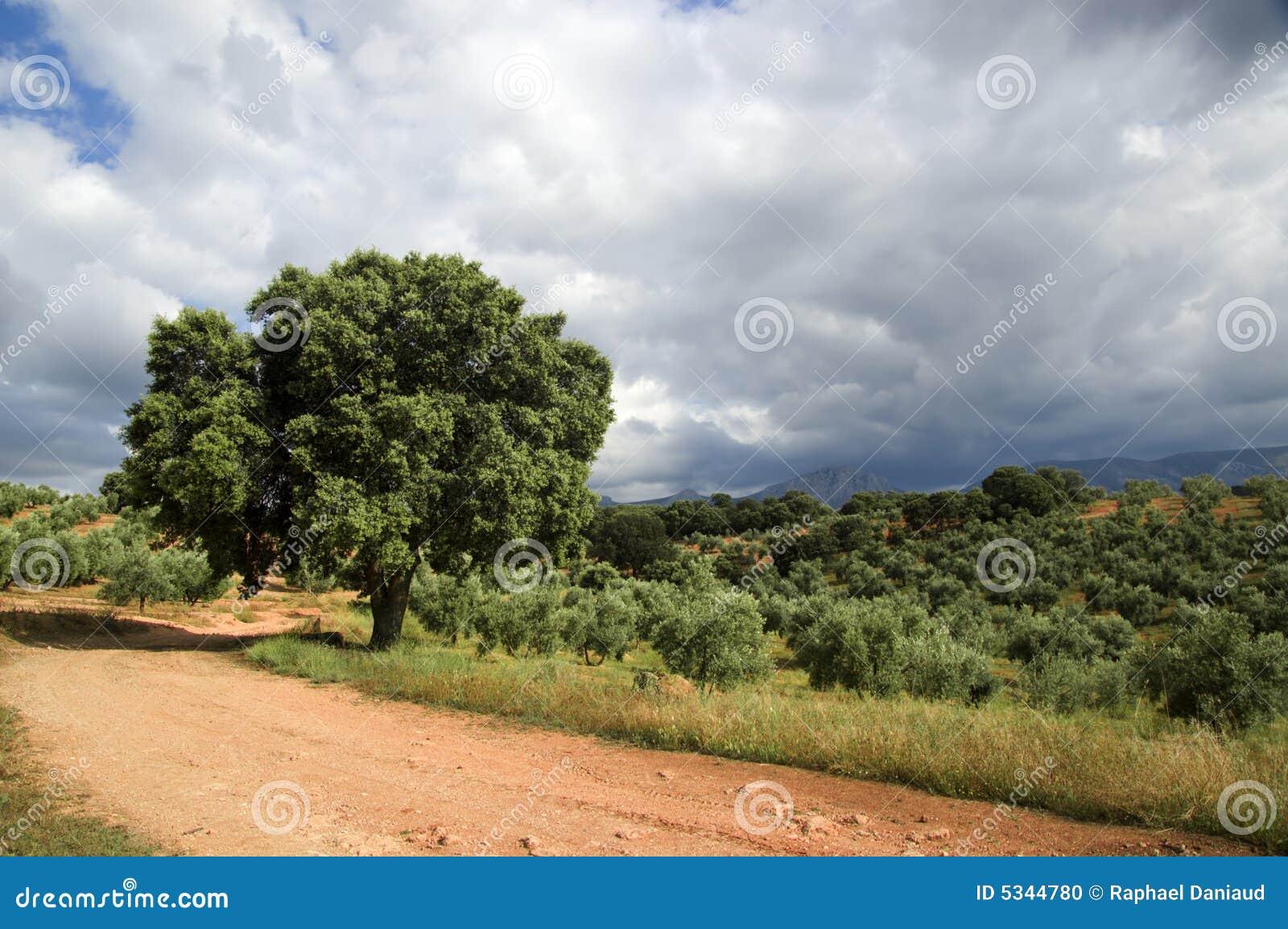 Spanish Landscape Stock Photo Image 5344780