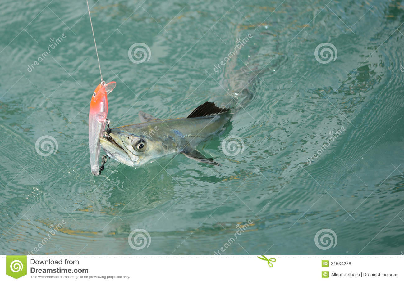 Spanish Mackerel Fish Caught On Hook And Fishing Line Royalty Free ... Pacific Ocean Underwater Map