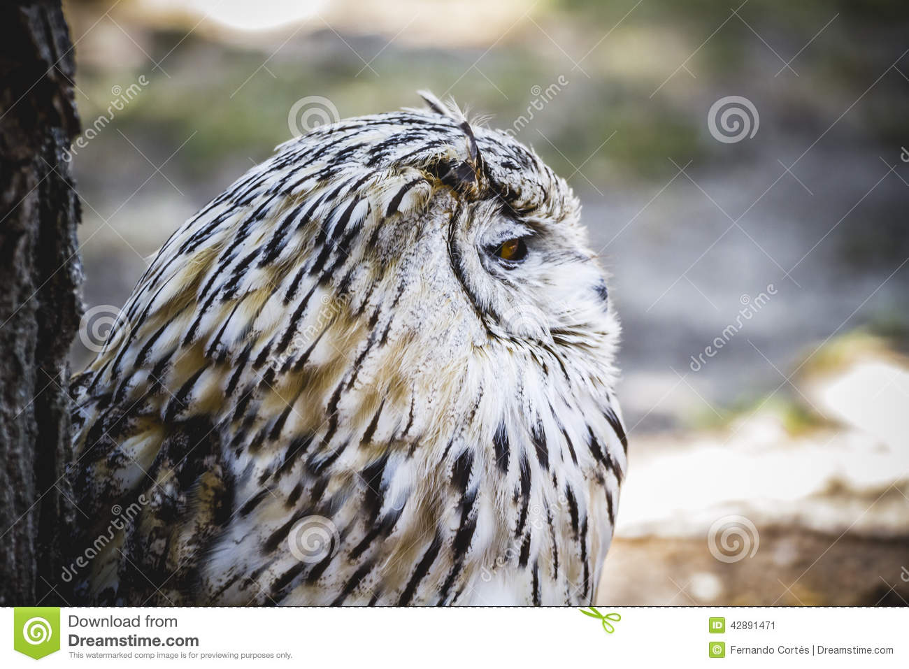 Spanish Owl In A Medieval Fair Raptors Stock Image Image Of Nature Animals 42891471