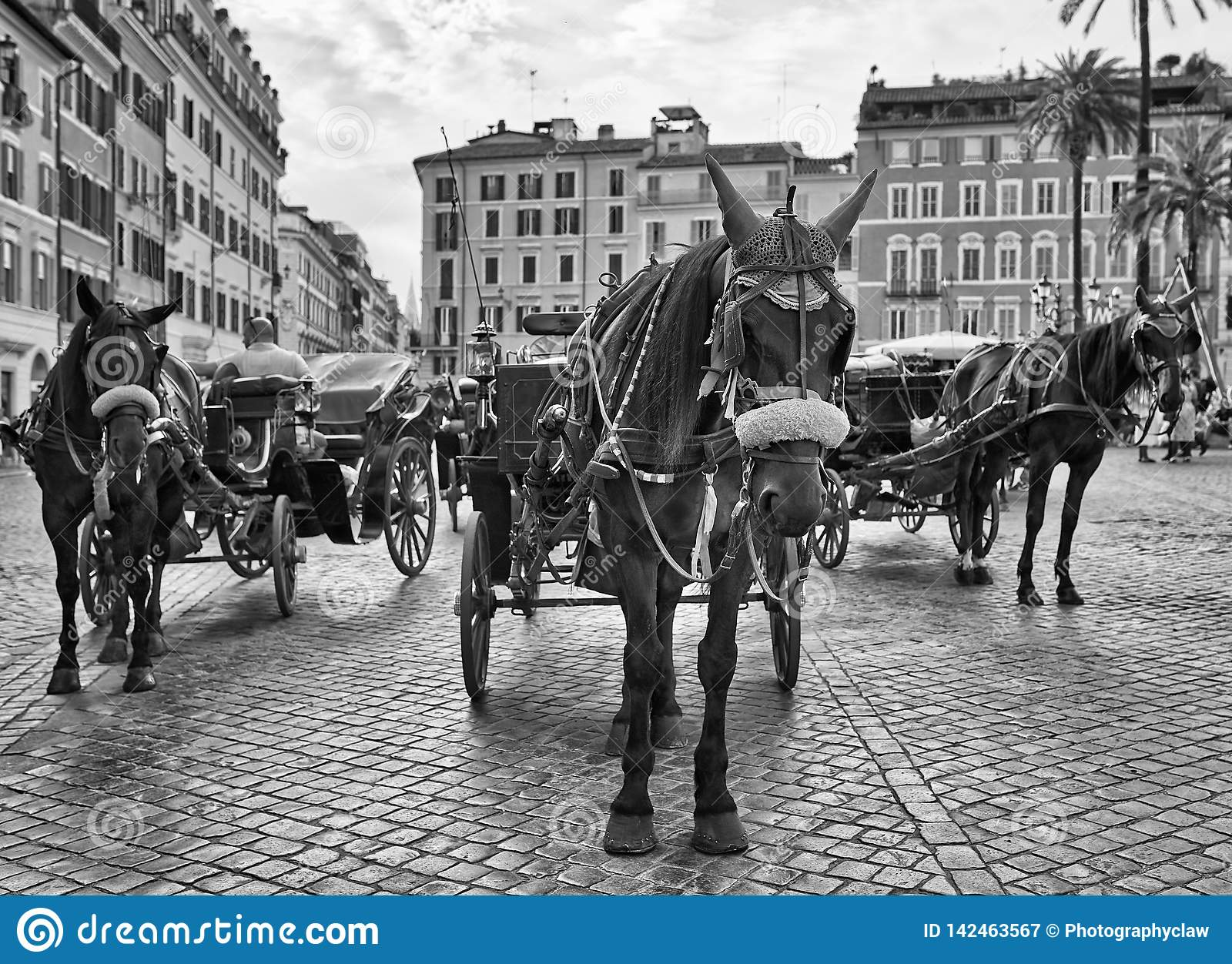 Spanish Steps Horse Carriage Black and White