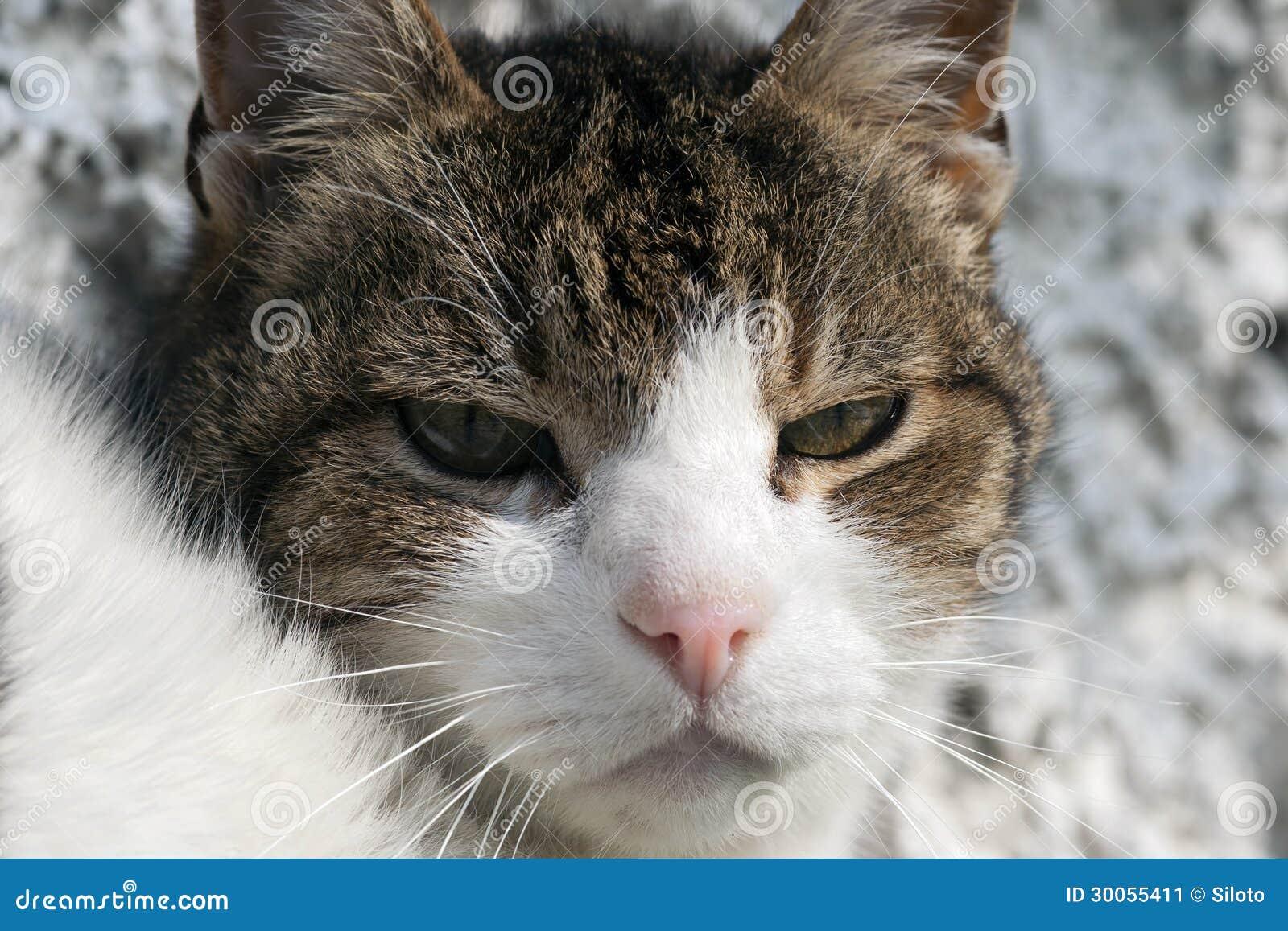 Gatto imbronciato immagine stock immagine di pets tomcat - Immagine del gatto a colori ...